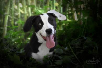 réussir séance photo avec son chien